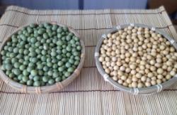 安心・安心の大豆